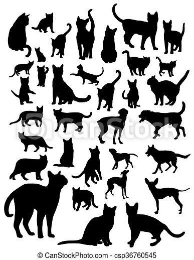 Animal Pets - csp36760545