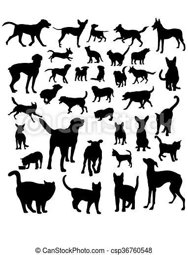 Animal Pets - csp36760548