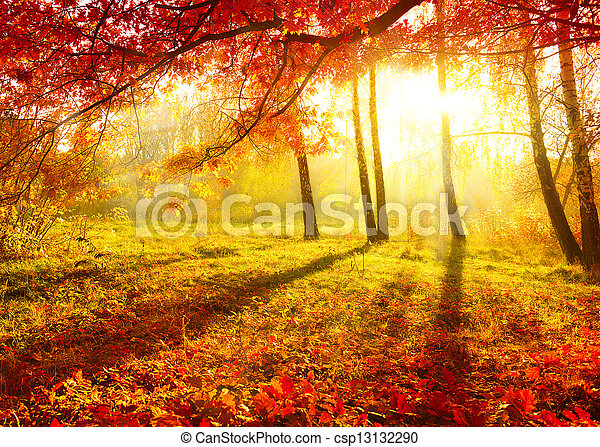 Autumnal Park. Autumn Trees and Leaves. Fall - csp13132290