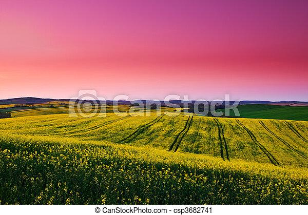 Canola field - csp3682741