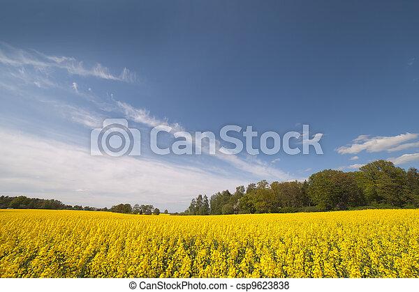 Canola field. - csp9623838