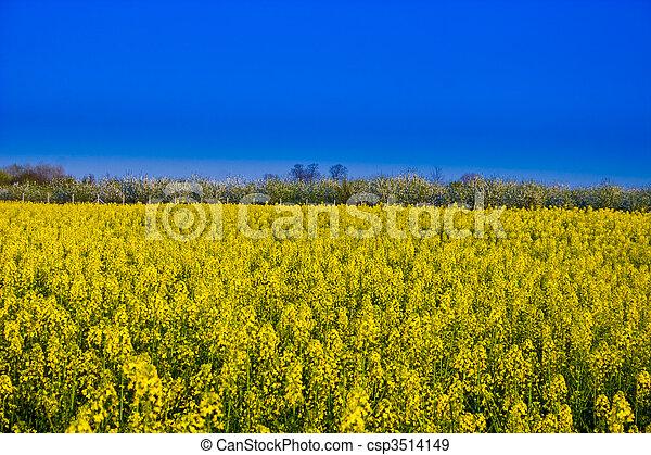canola field - csp3514149