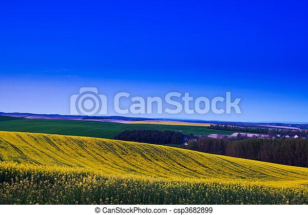 Canola field - csp3682899