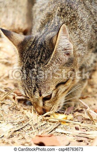 cat - csp48763673