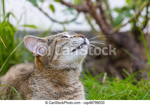 Cat - csp48799033