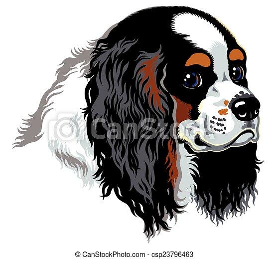 cavalier king charles spaniel - csp23796463