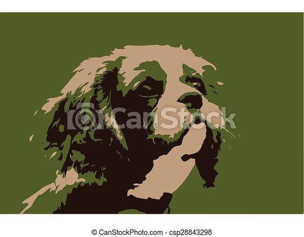 Cavalier King Charles Spaniel - csp28843298