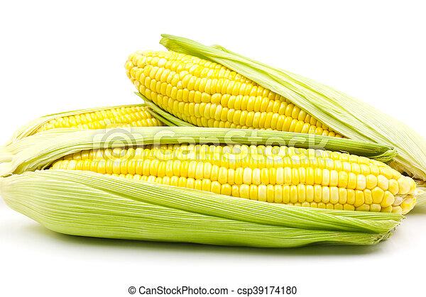 Corn - csp39174180