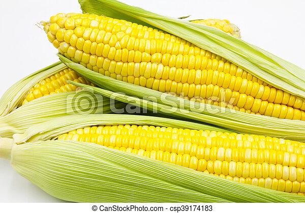 Corn - csp39174183