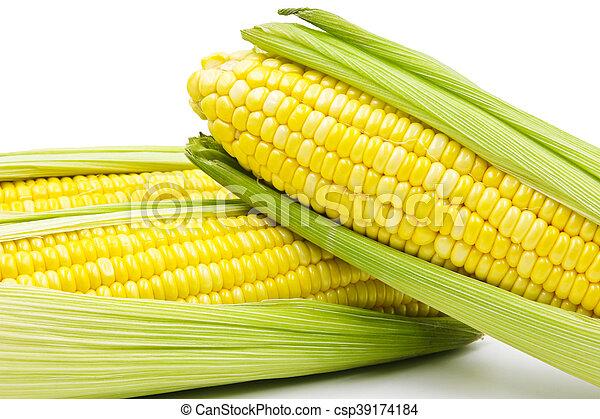 Corn - csp39174184