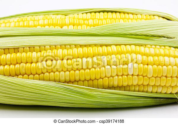 Corn - csp39174188