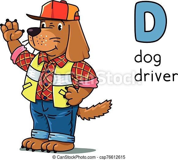Dog driver Animals and professions ABC. Alphabet D - csp76612615