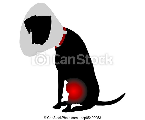 Dog with elizabethan collar and pain in the knee - csp85409053
