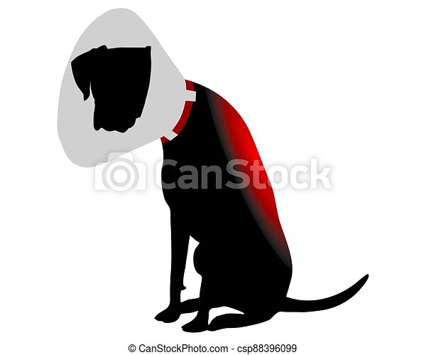 Dog with elizabethan collar and pain in the back - csp88396099