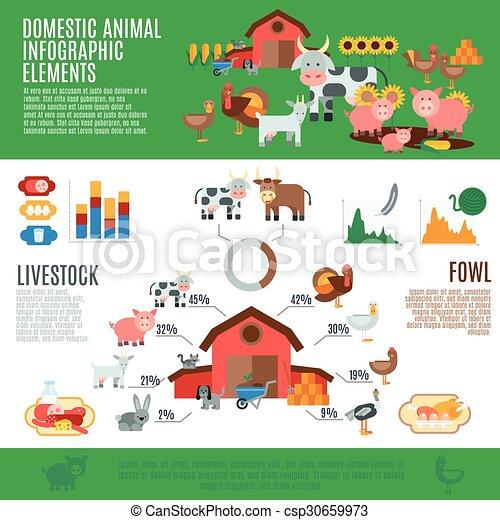 Domestic Animals Infographics - csp30659973