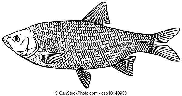 Fish - csp10140958