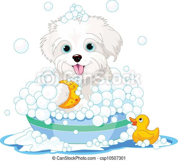 Fluffy dog having a bath - csp10507301