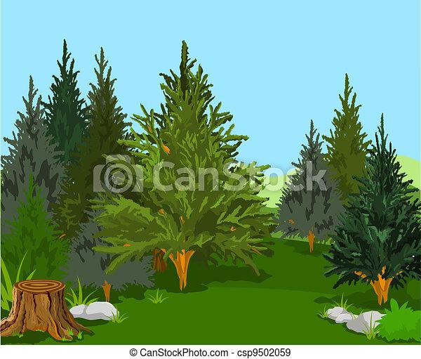 Forest Landscape - csp9502059