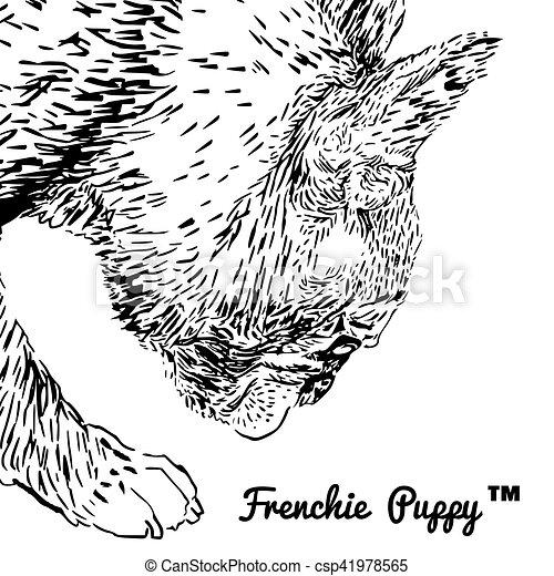 French Bulldog - csp41978565