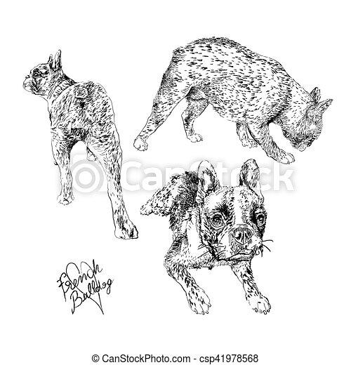 French Bulldog - csp41978568