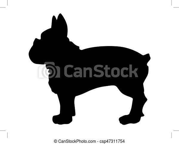 french bulldog - csp47311754