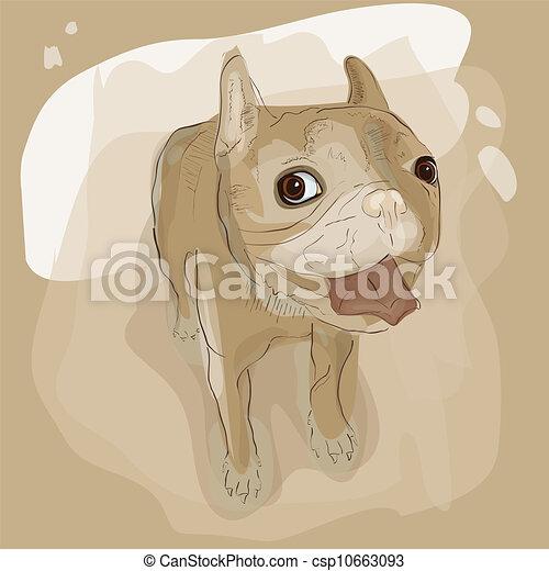 French bulldog - csp10663093