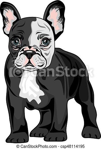 French Bulldog - csp48114195