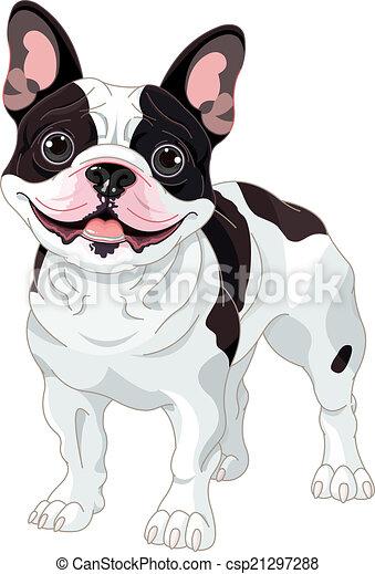 French bulldog - csp21297288