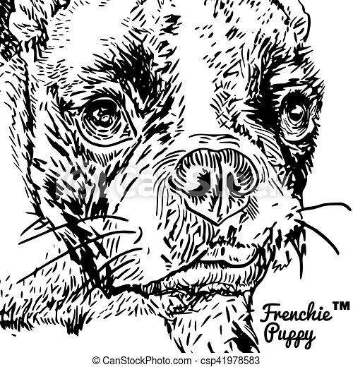 French Bulldog - csp41978583