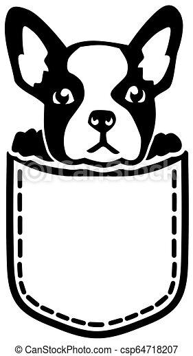 French Bulldog pocket - csp64718207