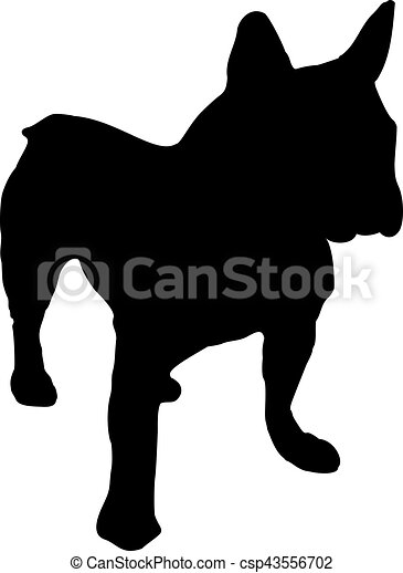 French bulldog - csp43556702