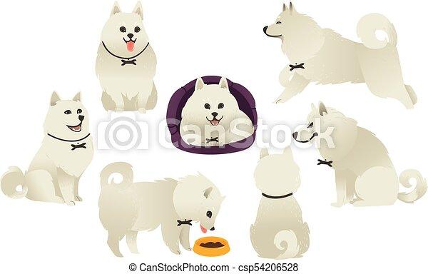 Funny white fluffy dog playing, sitting, eating - csp54206528