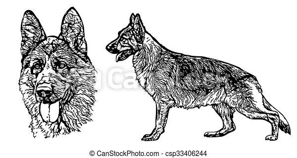 German shepherd - csp33406244