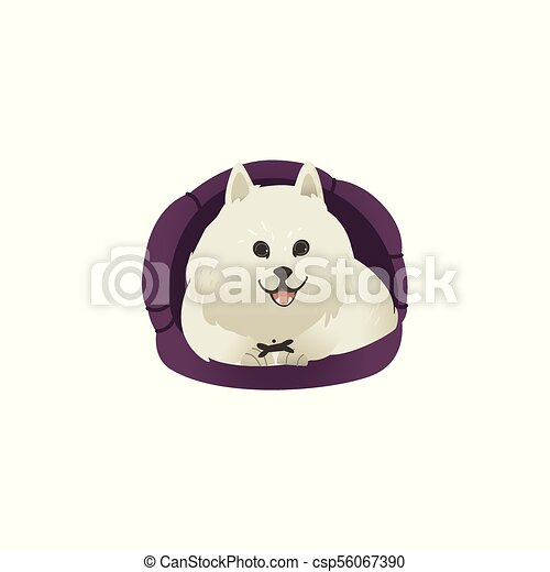 Happy smiling white fluffy dog lying in dog bed and showing tongue . - csp56067390