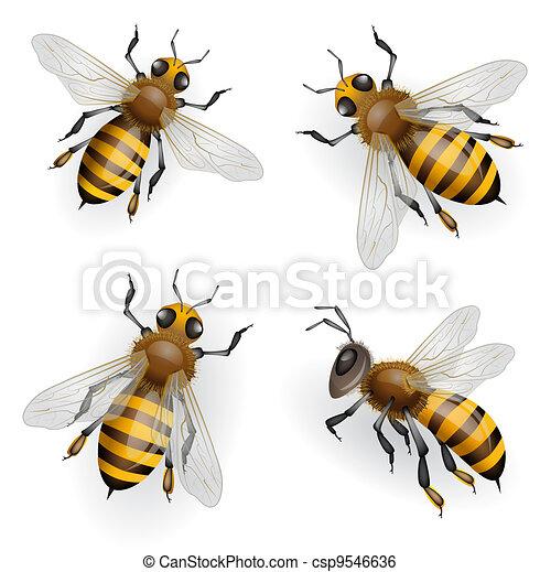 Honey bees - csp9546636