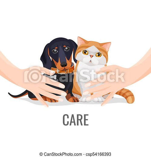 Human hands take care about cute pets dog and cat - csp54166393