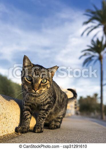 little cat - csp31291610