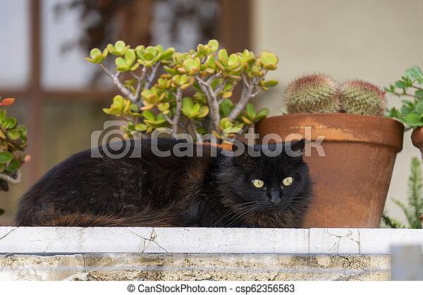 little cat - csp62356563