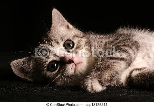 little cat - csp13185244