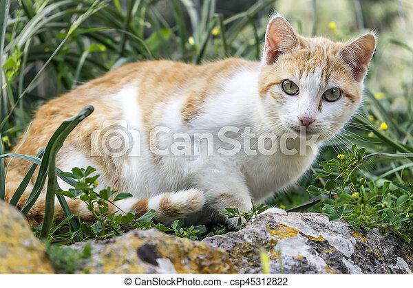 little cat - csp45312822