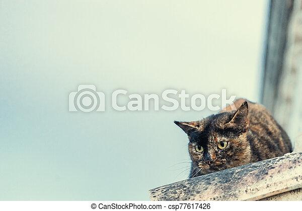 little cat - csp77617426