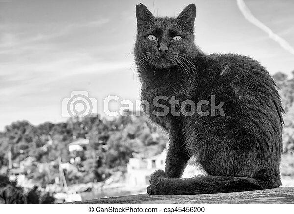 little cat - csp45456200