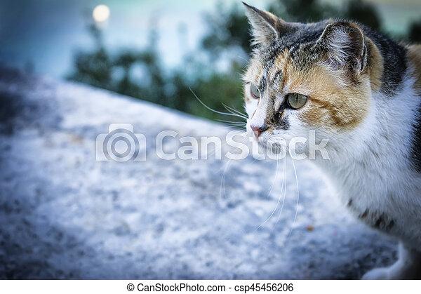 little cat - csp45456206