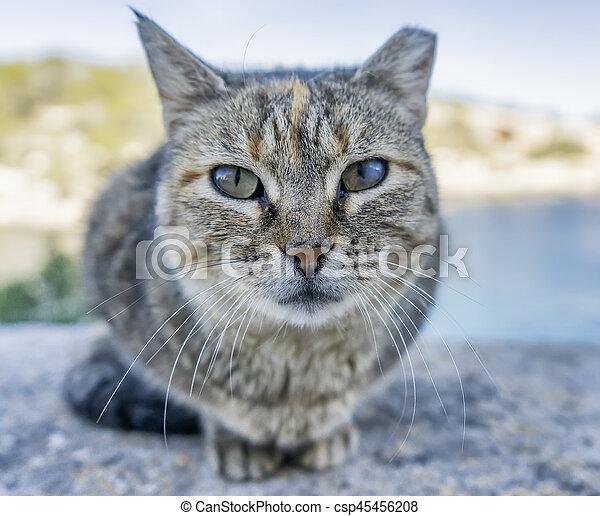 little cat - csp45456208
