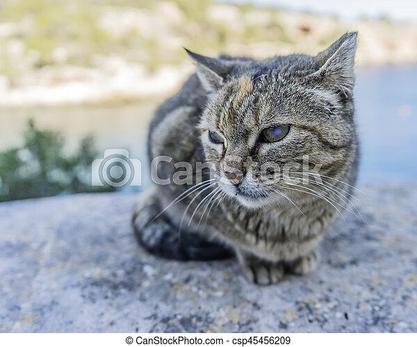 little cat - csp45456209