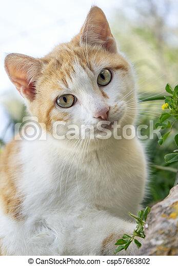 little cat - csp57663802