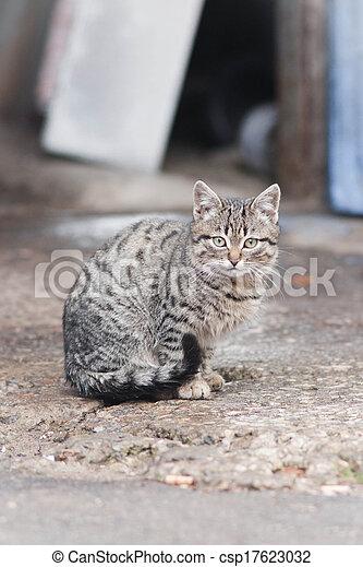 little cat - csp17623032