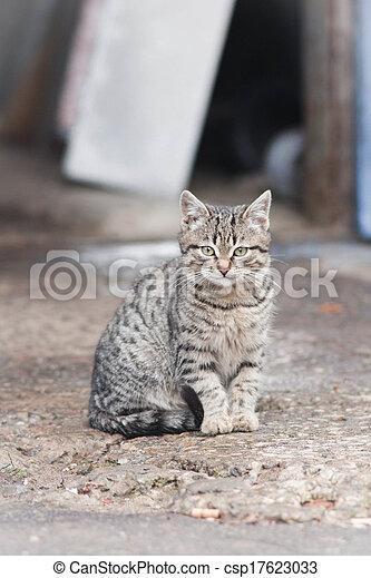 little cat - csp17623033