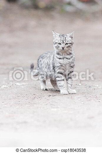 little cat - csp18043538