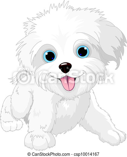 Playful lap-dog - csp10014167